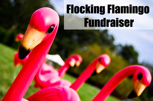 The Flamingo Fundraiser is a perfect Fundraising Idea for Kids! It's fun, creative, yet simple! (Photo by Ryan Hyde / Flickr)