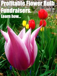 Flower Bulb Fundraisers - Fantastic fundraising products for Schools, Churches, Societies, and Clubs. (Photo by Mark Banks / Flickr)